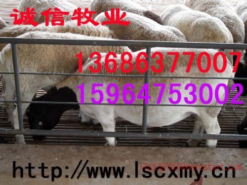 供育肥牛羊品种改良肉牛价格鲁西黄牛品种牛羊养殖技术