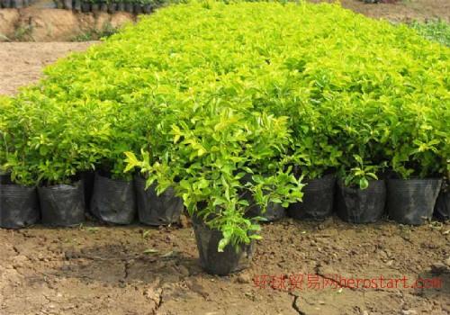 专业承接各种园林绿化工程
