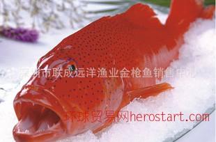 马尔代夫产天然野生石斑鱼--东星斑(0-4度保存,全程空运)
