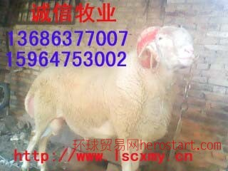 山西肉牛肉羊标准化规模化养殖小区诚信牧业