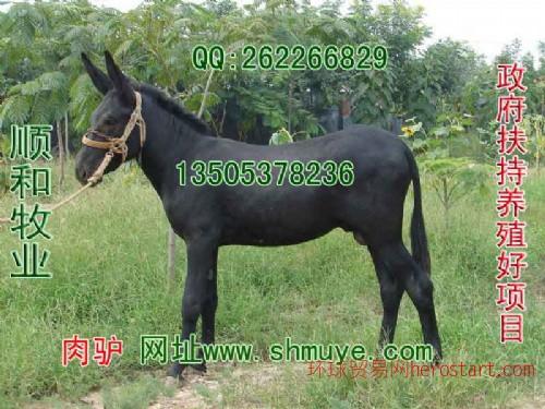 驴养殖 驴养殖场(顺和牧业养殖基地)