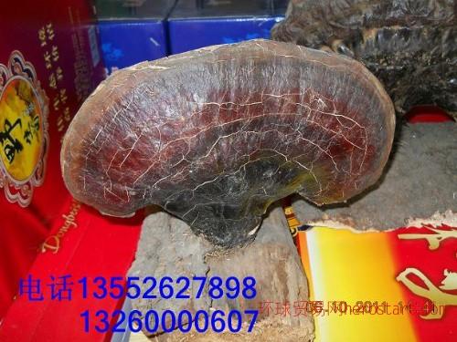 北京哪卖野生灵芝北京野生灵芝专卖北京野生灵芝价格