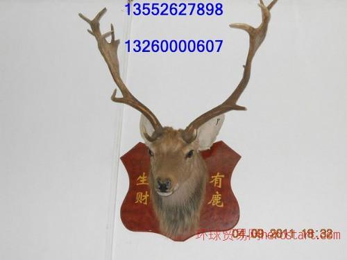 北京哪卖鹿头标本北京哪卖鹿头北京哪卖财鹿标本北京鹿头专卖