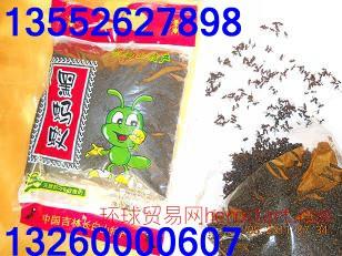 北京哪卖蚂蚁北京蚂蚁价格北京蚂蚁专卖北京蚂蚁大全