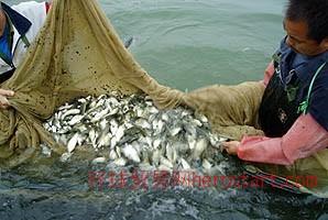 南部县鱼苗鱼种养殖基地
