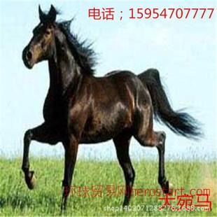 内蒙古养马场- 山东养马场马的价格是多少一匹 矮马 伊犁马出售