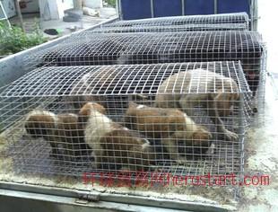 肉狗批发价格、养殖肉狗成本价格、山东肉狗养殖场