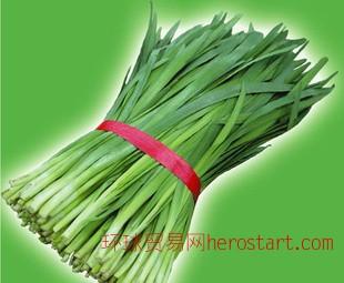 东台韭菜苔韭种植地销售优质