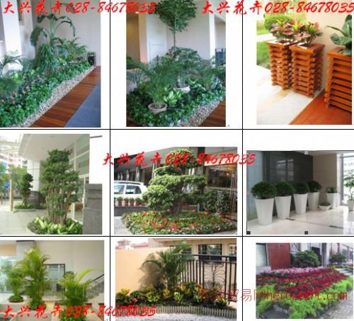 花卉租赁,成都植物租赁,成都花卉租摆,成都植物租摆,植物出租