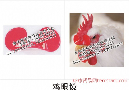 鸡眼镜、鸡防啄眼罩(使用方法)