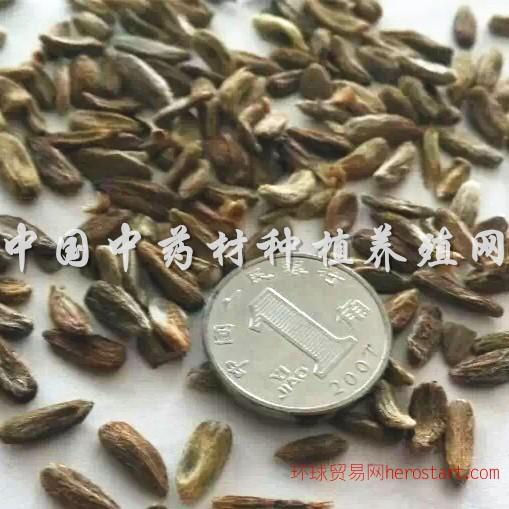中国中药材种植养殖网供药材种苗