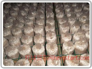 蘑菇棚网 蘑菇养殖网片 食用菌苗床网