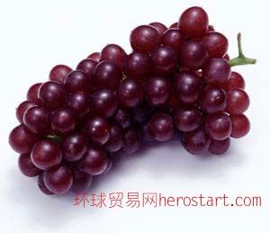 葡萄籽的提取物 95%原花青素