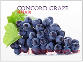 美国加州原产 康科德葡萄 Concord Grape 纯鲜浓缩果汁 美国工厂直销 直运