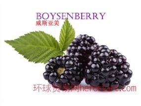 美国加州原产 波森莓 Boysenberry 纯鲜浓缩果汁 美国工厂直销 直运