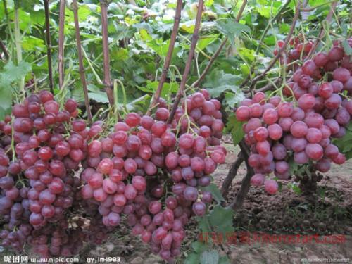 葡萄浓缩汁设备