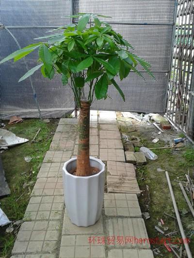 广州花木出租、花卉租摆绿化
