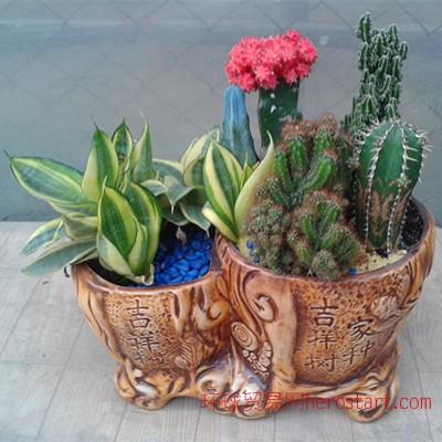 广州花卉养护|绿化养护|植物养护|租摆
