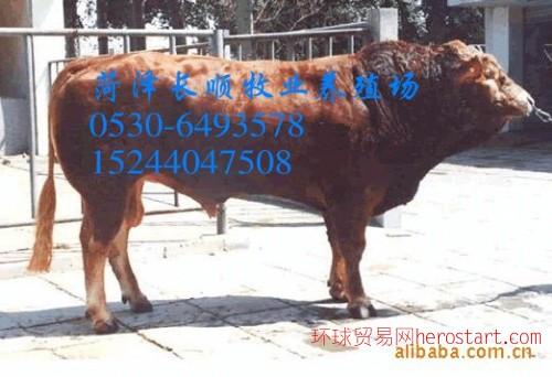 什么地方有质量好的小牛犊出售  卖利木赞牛的