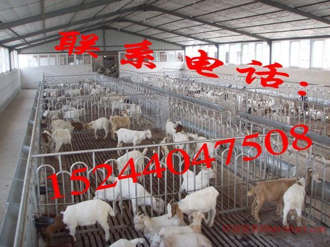 买牛犊子去哪家养牛场 山东长顺牧业养殖基地!