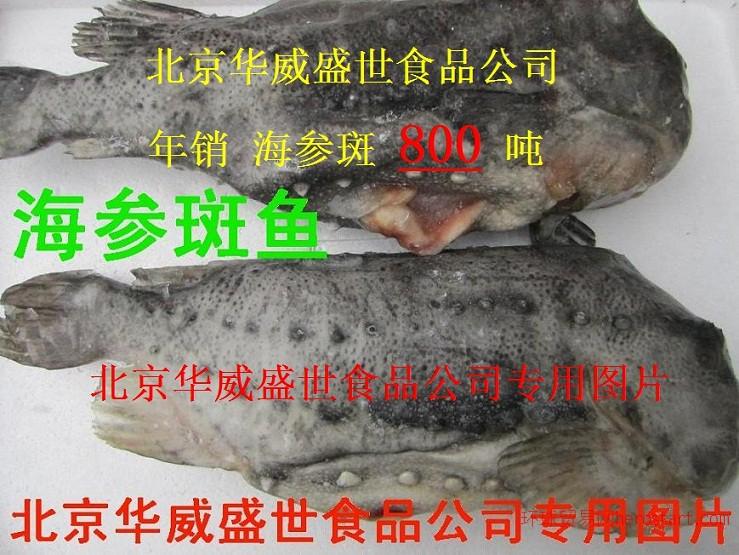 供应华威盛世1*10kg大连单冻生蚝