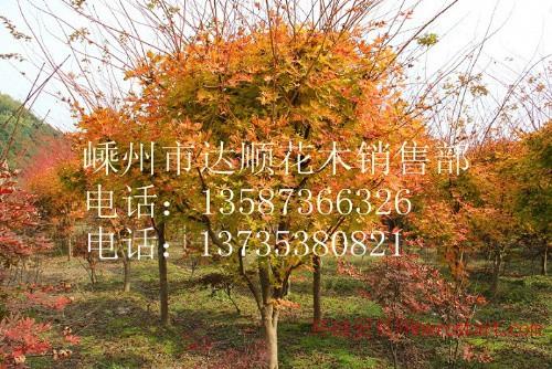 日本樱花,垂丝海棠,西府海棠,赤枫,