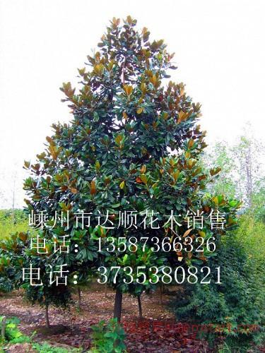 重阳木,无患子,栾树,广玉兰,红花木莲,马褂木,杜英等