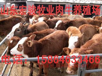 什么地方有卖牛的,小牛犊好养吗