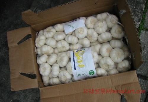 出口塞内加尔,哥伦比亚,斯里兰卡保鲜大蒜