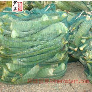 600亩江夏芦荟基地可食用库拉索芦荟鲜叶