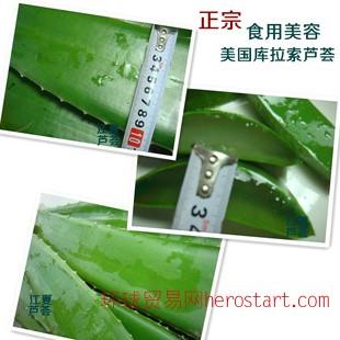 食用芦荟鲜叶片 美容养颜芦荟片 新鲜芦荟叶片 种植基地批发 特价