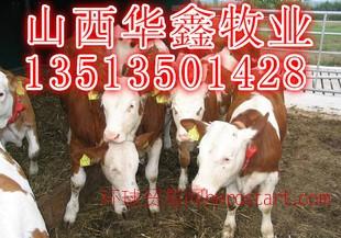100头肉牛建设牛舍需要投资多少钱 牛舍建设标准 肉牛养殖前景