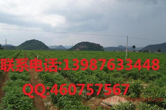 小米辣价格 供应属性 产地 厂家:云南同和辣椒