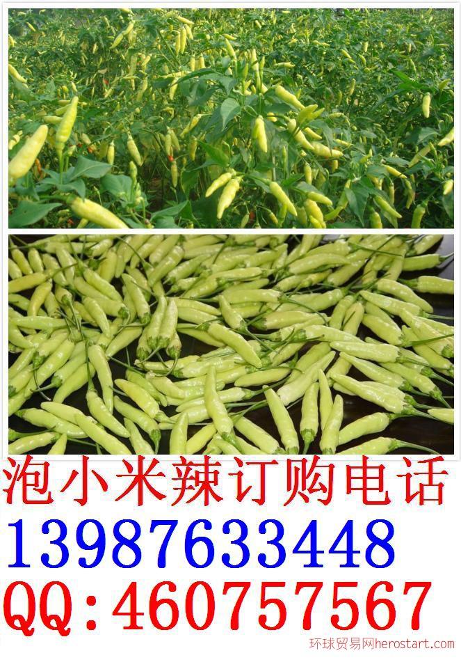 云南小米辣加工厂家大量供应新鲜小米辣 -黄姜