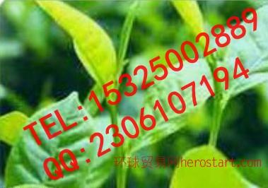 纯天然食品抗氧化剂茶多酚