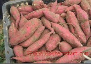 新鲜白薯海南板栗红薯无公害有机紫地瓜黄心生甘番薯