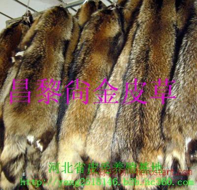 长期供应貉子,蓝狐,银狐,貂皮等
