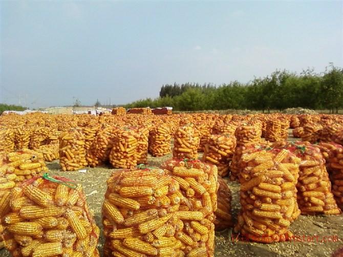 兴丰合作社2015新玉米4000吨_兴丰农业
