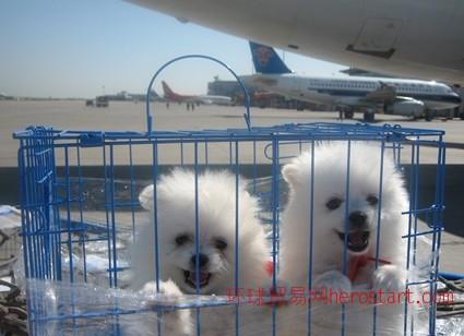 双流机场宠物托运、全国当日达