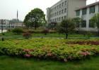 园林绿化景观设计、施工、养护,绿化树木的修剪和养护