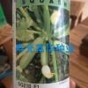 进口早熟耐热西葫芦种子-SQ210