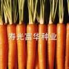 进口坂田七寸胡萝卜种子,坂田317 胡萝卜种子