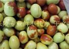 2016山东鲜红枣产地鲜果预定中