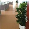 苏州办公室绿化 苏州办公室绿化租赁 办公室绿化租摆