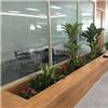 苏州室内绿化租赁 绿化养护公司 办公室绿化哪家好