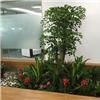 苏州室内绿化公司 室内绿化定制 室内绿化养护价格