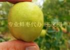 山东鲜枣鲜大枣鲜梨枣产地提前预售