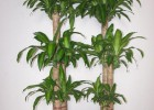专业植树、俢树、移树、铺草坪、花卉种植、防腐木造景