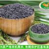 优质洋县黑米批发 减肥黑米粥米1000g黑米精品产地直销