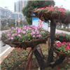 苏州室外盆栽花卉 盆栽花卉价格 室外绿化装饰